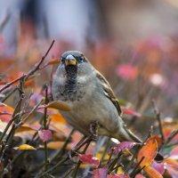 Птица :: Денис Атрушкевич