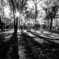 Утро в городском парке ! :: Vadim77755 Коркин