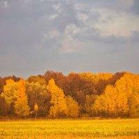 Пламя осени :: Svetlana Sneg