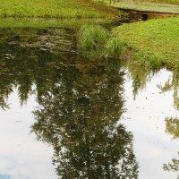 Отражение сентября :: валерия