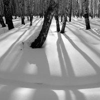 Тени на снегу :: Людмила Цвиккер