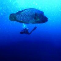 Синее-синее Красное Море :: Igor Veter