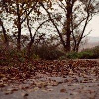 autumn :: Даша Ерошенкова