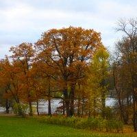 Осенний парк :: Денис Матвеев