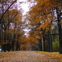 Осенние дорожки :: Денис Матвеев
