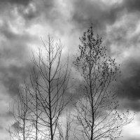 На краю. :: Валерий Молоток