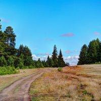 Путь в тайгу :: Дмитрий Марков