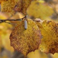 Осенний лист ! :: Сергей Кондратович