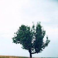 Одиночество :: Олег Барзолевский