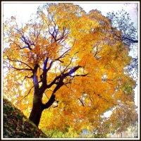 Солнечное дерево. :: Игорь