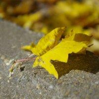 Осенний Лист :: Армен Григорян