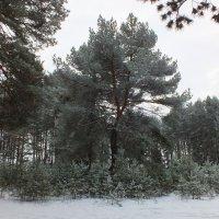 Западная Сибирь :: шаман викторович вдовенко