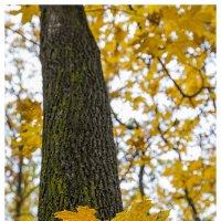 Что такое осень... :: Petrovich