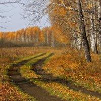 Дорога в осень :: Olenka