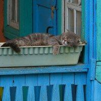 Безмятежный сон усталого цветовода. :: Victor Klyuchev