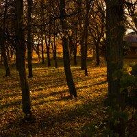 осень. :: Диана Елизарова
