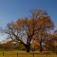 Дуб в Коломенском парке :: Анастасия Светлова