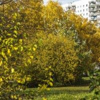 осень в городе :: Лариса Батурова