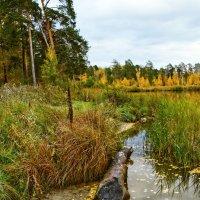 Все то же озеро... все та же осень... :: Pavel Kravchenko