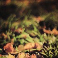 Осень :: Алексей Савченко