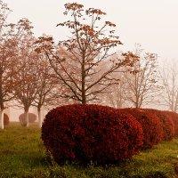 В осеннем парке туманным утром :: Тамара Цилиакус