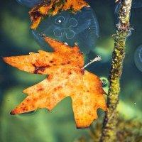 Осень и море. :: Svetlana Sneg