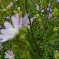 травы... :: Равиль Хакимов