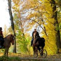 Глумливое ржание коней над их смешной проволочной имитацией в золотом ореоле октября :: Ирина Сивовол