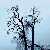 Дерево :: Katarina S