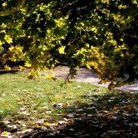 Цветная осень :: Александр Скамо