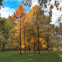 парк воронцово.осень.москва :: юрий макаров