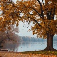 Гатчинский парк :: Olga Firsova