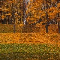 осенний парк :: Olga Firsova