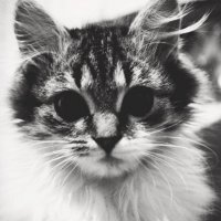 Кошка :: Константин Куликов