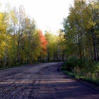 Дорога на Шантропай :: pich
