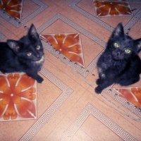 коты :: Ekejan Sembaeva