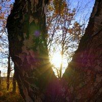Солнце садится . :: Ирина Киямова