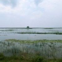 Заливные просторы Камбоджи :: Наталья Нарсеева
