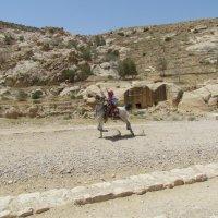Иорданский джигит :: Galina Dolkina