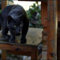 Кот в интерьере :: Виолетта
