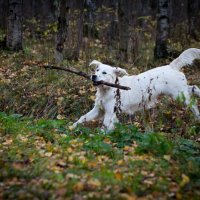 Верный пес барбос :: Maxim Rozhkov