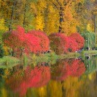 краски осени :: Настя Генчева