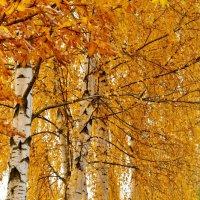 Осень :: Александр Сергеев