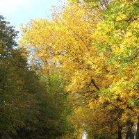 Осенняя аллея. :: Алекс Вол