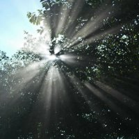Солнечные лучи :: Kondi 3000
