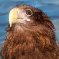 Гордый птиц... :: Иван Солонинка