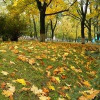золотая осень :: Galina R