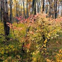 Куст в лесу :: Юрий Стародубцев