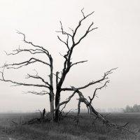 Осень :: Виктор Дашкевич