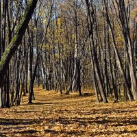 Осень.. :: Александр Чекмарев
